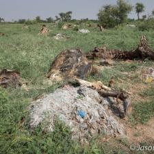 Bovine Charnel Ground