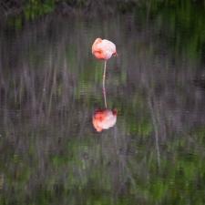 Flamingo Monopod
