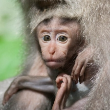 Baby Monkeys Look Like Old Men