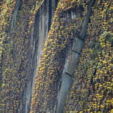 An Incline of Bromeliads
