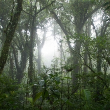 Cloud Forest Morning