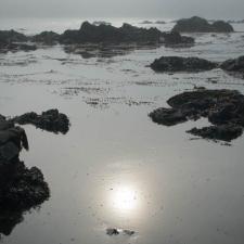 Seaweed and Fog