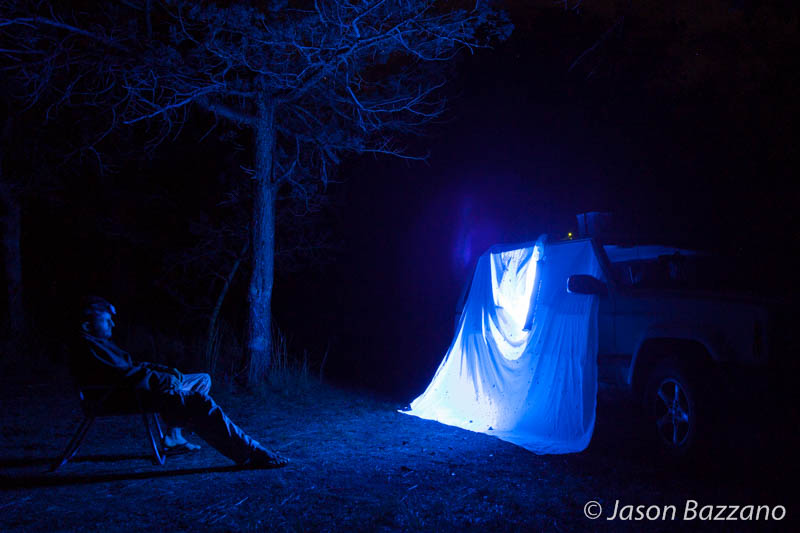 How to black light for insects.