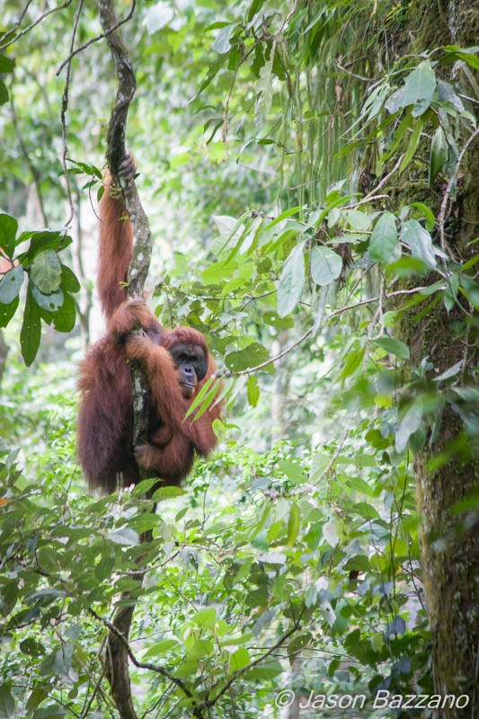Seeing a wild orangutan brachiate by my camp is one of many experiences I wouldn't have had without lugging a bunch of gear into the jungle.